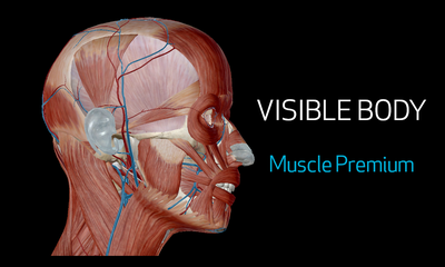 VISIBLE BODY : module Muscle Premium
